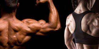 7 exercices musculation dos grands dorsaux
