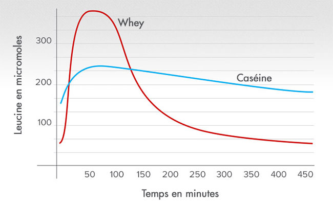temps absorption whey caseine