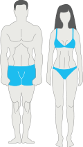 morphologie mesomorphe