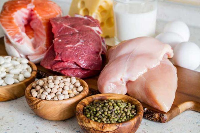 proteine alimentation