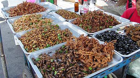 consommation-insectes-santé