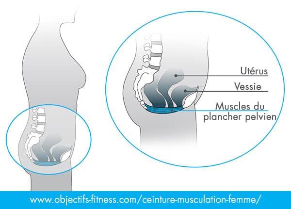 plancher pelvien femme musculation