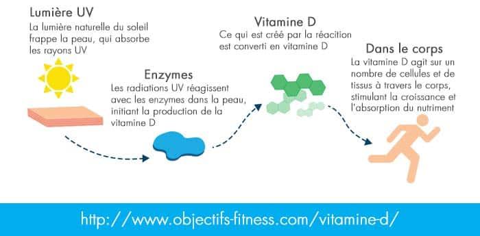 comment est assimilé la vitamine D